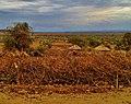 Maasai Land Tanzania - panoramio (5).jpg