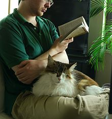 A long-haired calico cat sat in the lap of a man who is sat cross-legged on the floor.