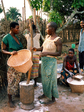 Cassava-based dishes - Fufu, or cassava bread, is made in Africa by first pounding cassava in a mortar to make flour, which is then sifted before being put in hot water to become fufu. The image shows fufu being prepared in Democratic Republic of Congo.