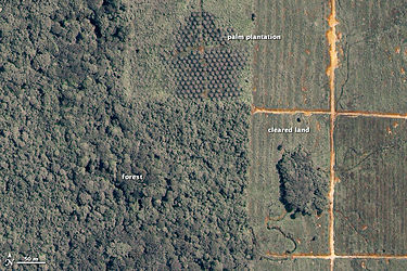 Satellite image of rainforest converted to oil palm plantations. Malayasia iko 2002169.jpg