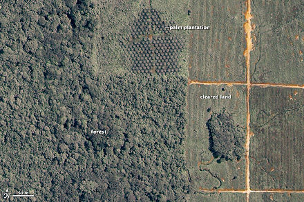 A satellite image showing deforestation for a palm oil plantation in Malaysia Malayasia iko 2002169.jpg