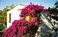 Mallorca - Appartments - Club - Europa - panoramio (1).jpg