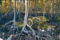 Mangrove Park Lumut.png