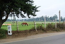 Road with marker, with a horse grazing in the background