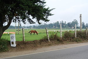 Nuwara Eliya District - Marker on the A5 highway in Nuwara Eliya, horse and Race Course in the background