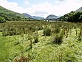Marshland north west of Loweswater - geograph.org.uk - 509144.jpg