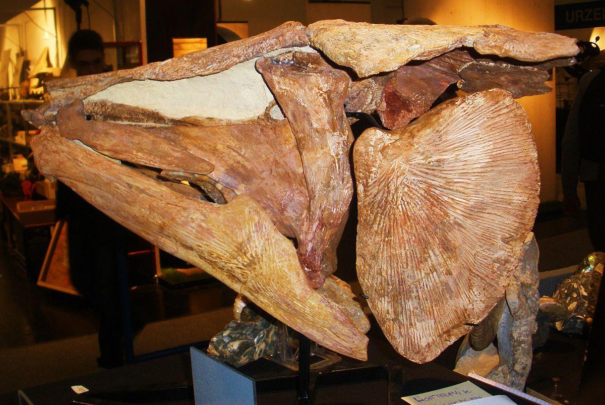Mawsonia (fish) - Wikipedia