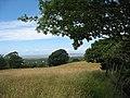 Meadow above Hafod-Boeth - geograph.org.uk - 887030.jpg