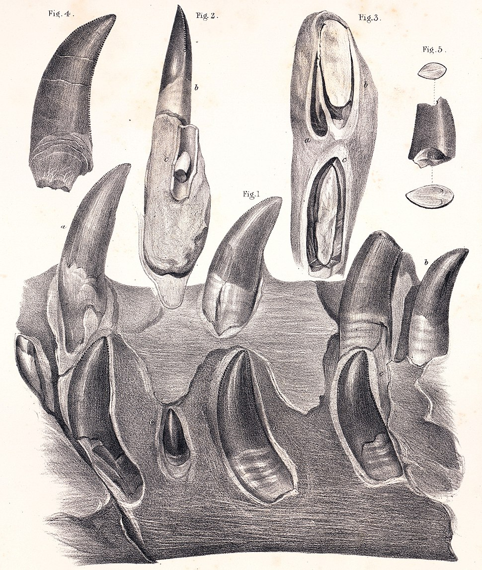 Megalosaurus mandible