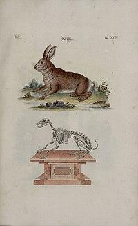 Habitat Bijzettafel Kilo.Rabbit Wikipedia