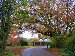 Midgham in the Autumn - geograph.org.uk - 1941.jpg