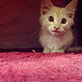 Midna Kitty.jpg
