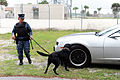 Military working dog 150325-N-BB308-067.jpg