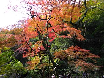 English: Colored leaves in Minoo Mountains, Os...