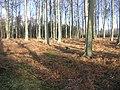 Mixed Woodland - geograph.org.uk - 123778.jpg