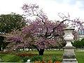 Mon voyage pour la France - jardin des tuileries - panoramio.jpg