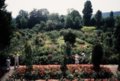 Monet's Garden 1989 Copyright Mitzi Humphrey.png