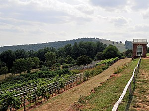 Culture of Virginia - The vineyard at Thomas Jefferson's Monticello home did not produce wine until the late 20th century.