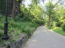 A paved pathway in the park lined by shrubs and trees