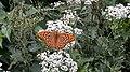 Motyl Rudawski Park Krajobrazowy AL01.jpg