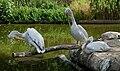 Muenster-100720-15824-Zoo.jpg