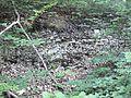Muschelkalk Huy 2014-06.jpg