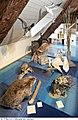 Musee du Leman 33.jpg