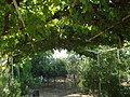 My garden entrance in Jbaa in summer - panoramio.jpg