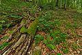 Národná prírodná rezervácia Stužica, Národný park Poloniny (05).jpg