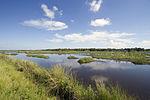 NASA Kennedy Wildlife - Freshwater Impoundment.jpg