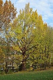 ND Hackinger Schlosspark 433 (03).jpg