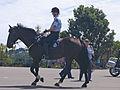 NZ Police Horse - Flickr - 111 Emergency.jpg
