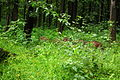 Nagarhole National Park, Kodagu 6900.JPG