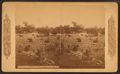 National Military Cemetery, Graves, Nashville, Tenn, by Continent Stereoscopic Company.png