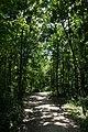 Nationalpark Donau-Auen Lobau Biberhaufen Mai 2016 01.jpg