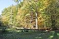 Nationalpark Hainich ausgetrockneter Hünenteich.jpg