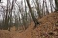 Nature reserve Šance in autumn 2012 (18).JPG
