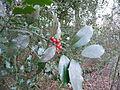 Naturschutzgebiet Groppenbruch 003.jpg