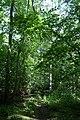 Naturschutzgebiet Haseder Busch - Im Haseder Busch (5).jpg