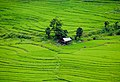 Nepal1010.jpg