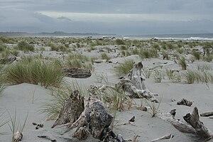 Haast, New Zealand - Haast Beach in 2007