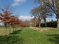 New avenue of trees in a field - geograph.org.uk - 356414.jpg