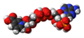 Nicotinic acid adenine dinucleotide phosphate zwitterion spacefill.png