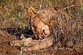 Nkomazi Game Reserve, South Africa (22664049171).jpg