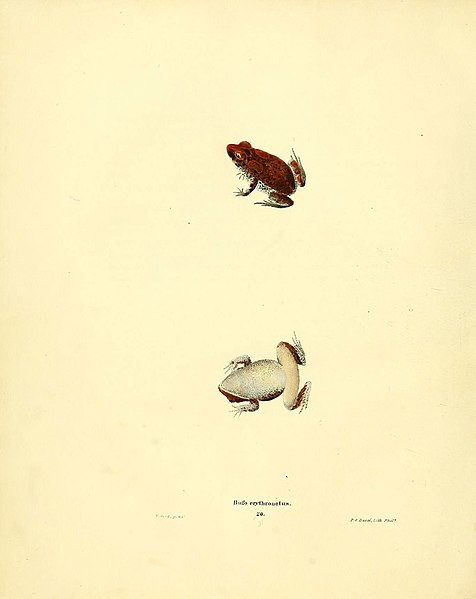File:North American herpetology, or, A description of the reptiles inhabiting the United States (6076445878).jpg