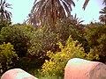 Oasis de Gafsa - panoramio.jpg