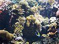Oceanarium corals.JPG
