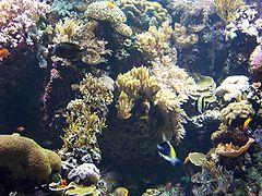 external image 240px-Oceanarium_corals.JPG