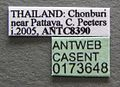 Oecophylla smaragdina casent0173648 label 1.jpg