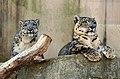 Oji zoo, Kobe, Japan (8445070058).jpg